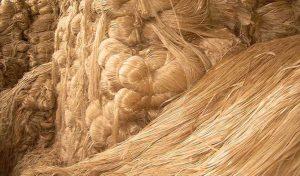 শত বিপত্তিতেও ঘুরে দাড়াচ্ছে পাট খাত