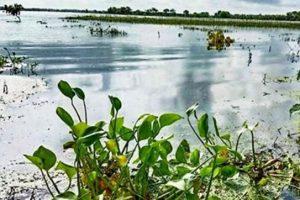 ভারত থেকে আসা পানিতে যশোরের নিম্নাঞ্চল প্লাবিত