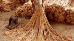 কম দামে পাট কিনতে ষড়যন্ত্র করছে মিল মালিকরা