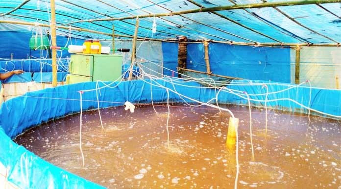বায়োফ্লক পদ্ধতিতে মাছ চাষে সাফল্য