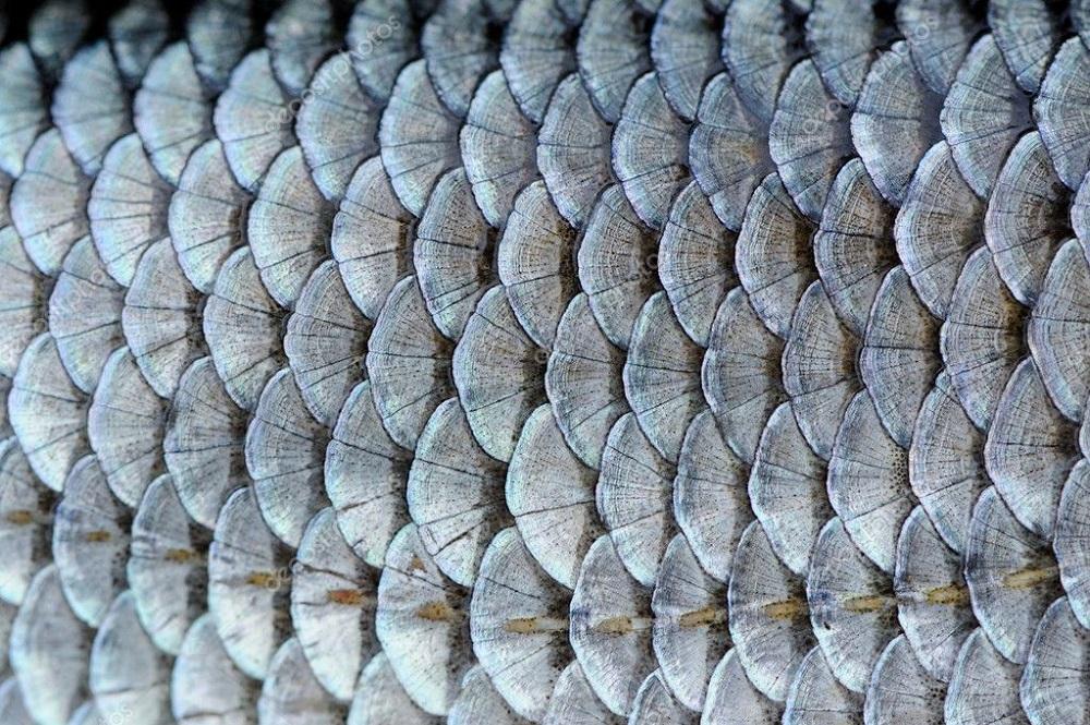 মাছের আঁশ রফতানিতে আসছে বৈদেশিক মুদ্রা
